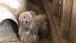 PHOTOS: 50 Dogs Rescued From Large Puppy Mill