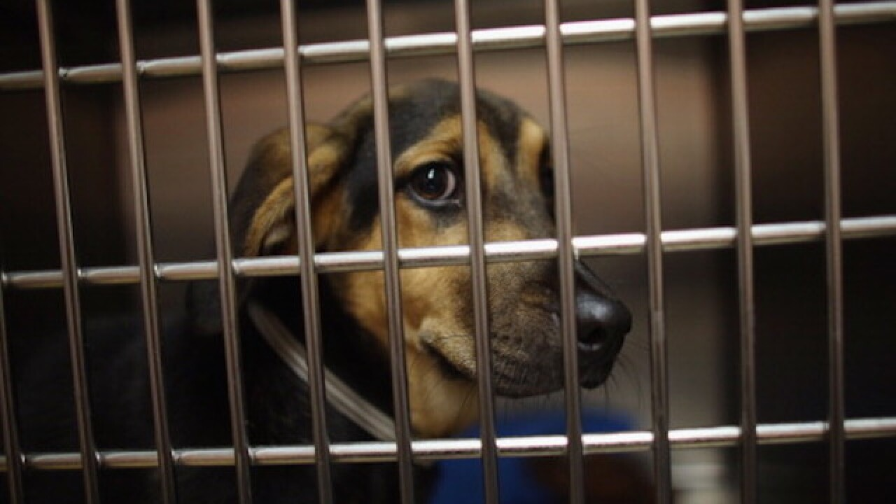 Animal shelter finds 310 pets a new home in one day