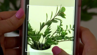 Plant Snap Abby's Apps.PNG