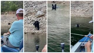veitch bear.jpeg