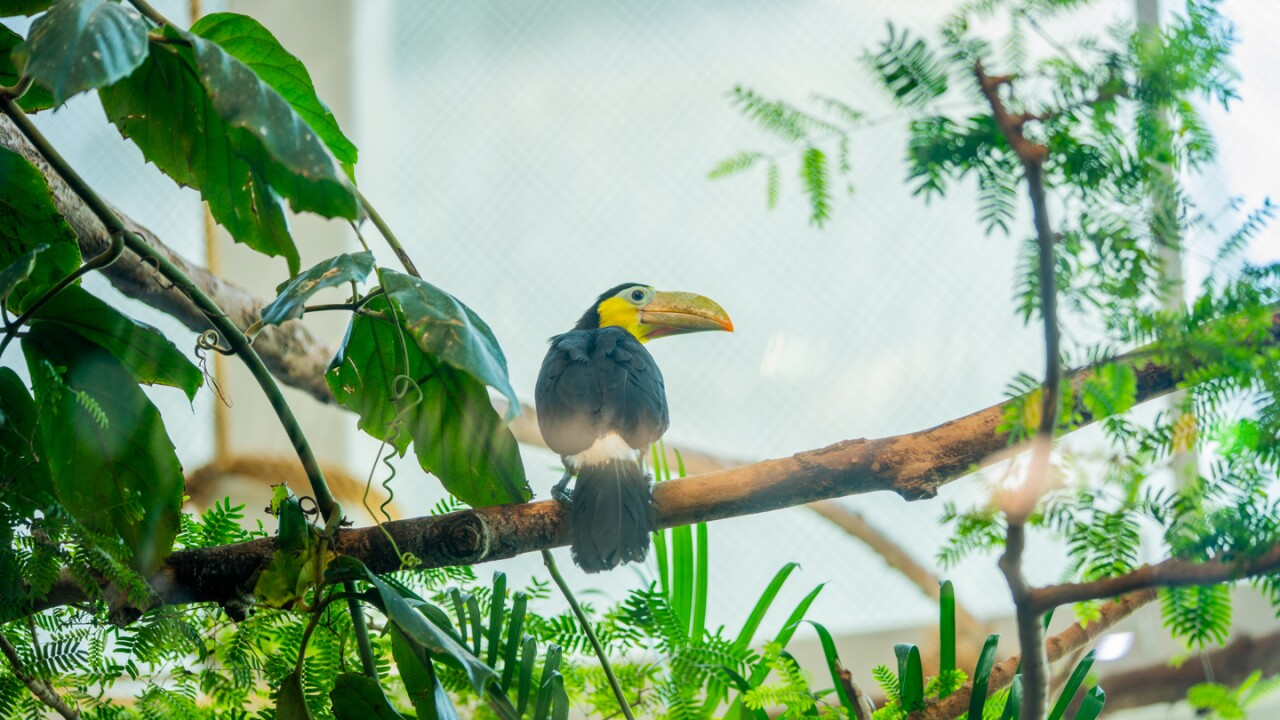 baby toucan 032.jpg