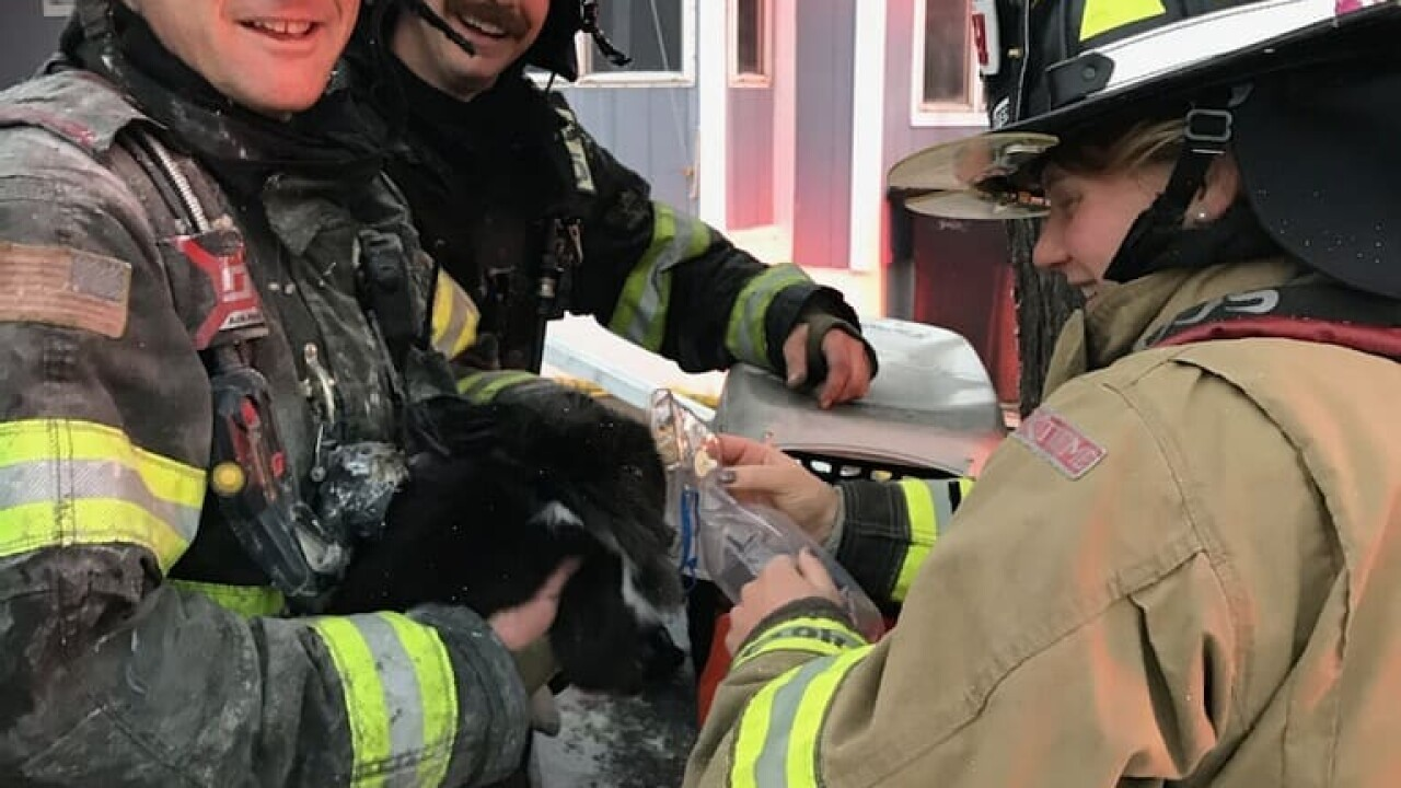 Billings firefighters save pet rabbit from West End house fire Sunday
