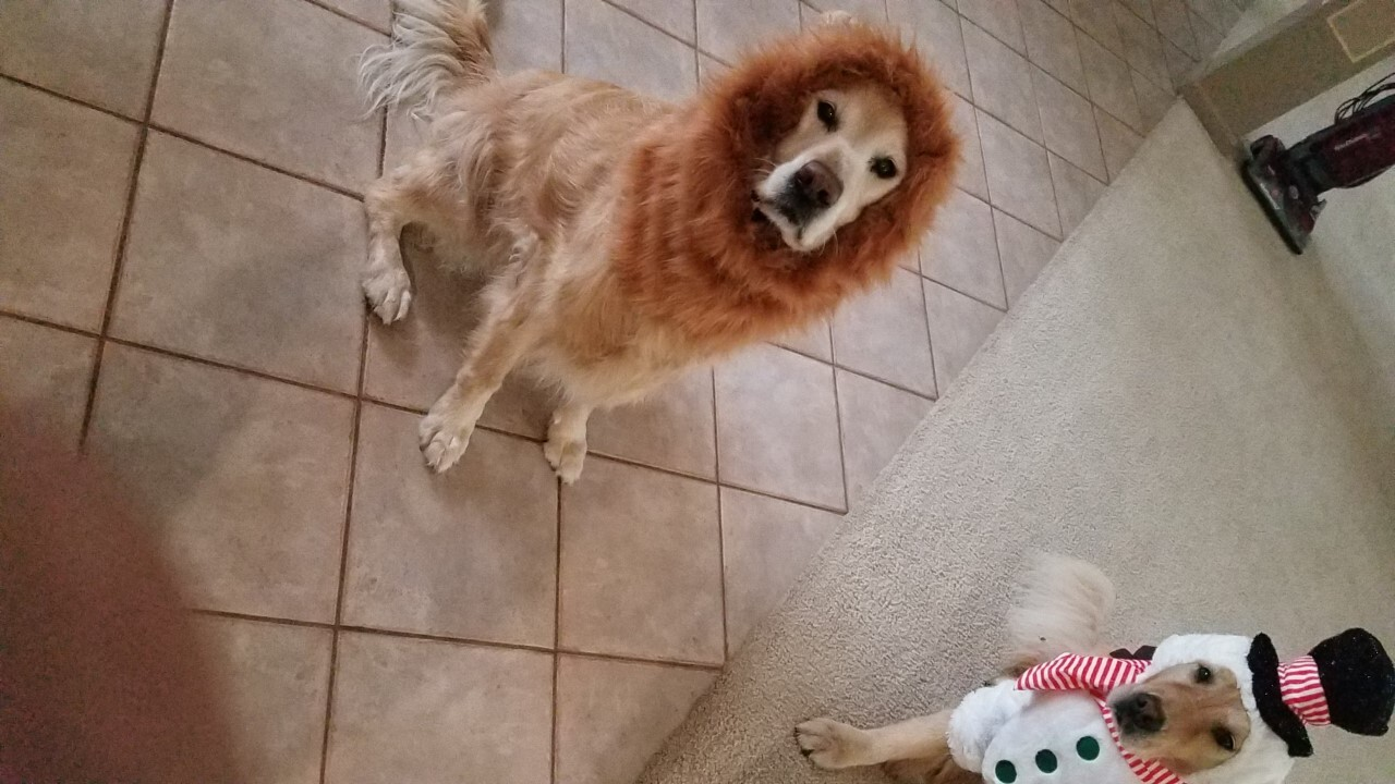 Pet Costume16.jpg