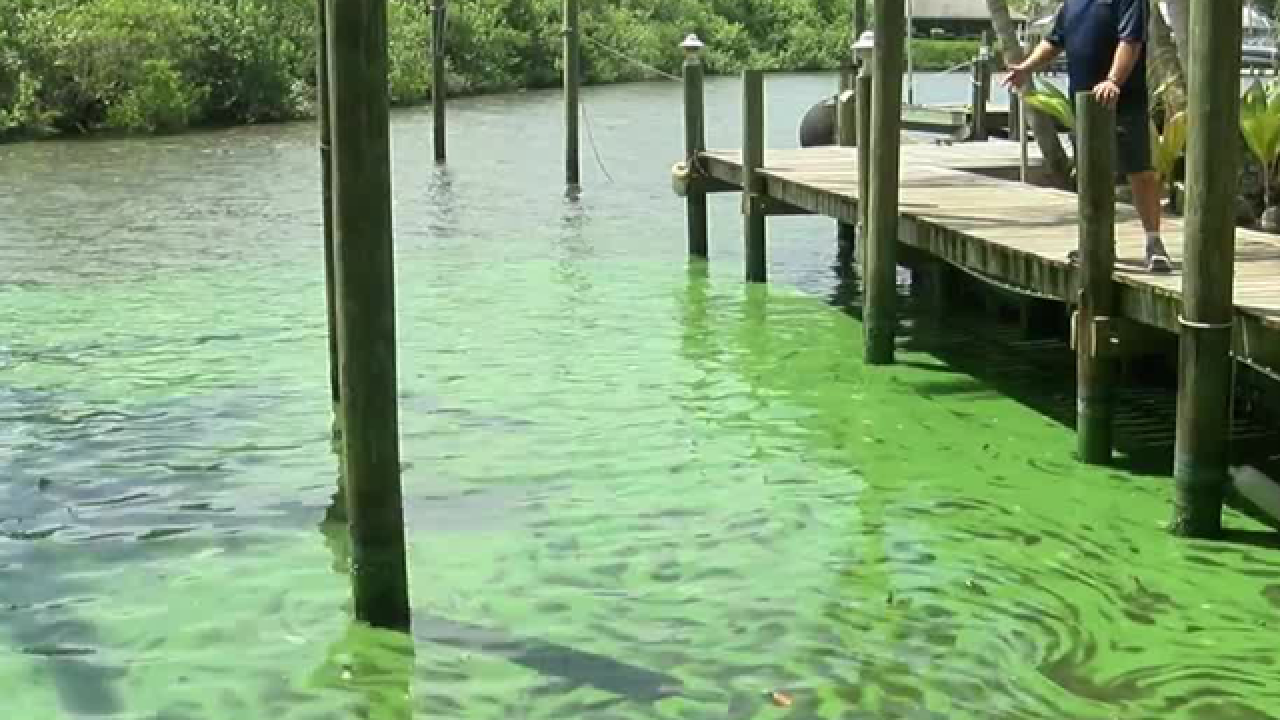 State of emergency declared in Martin County for algae