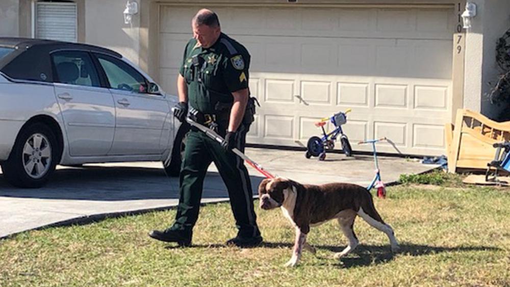 suspect-dog-001.png
