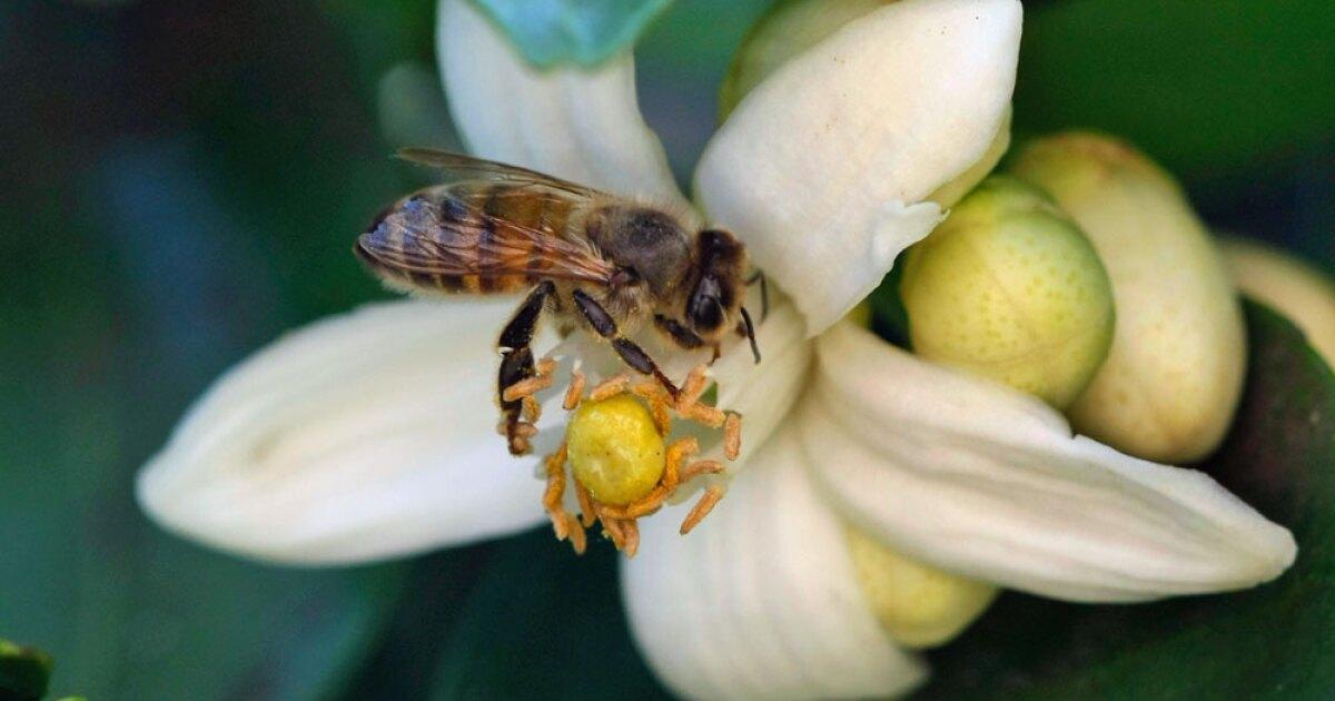 Florida may see new honeybees license tags