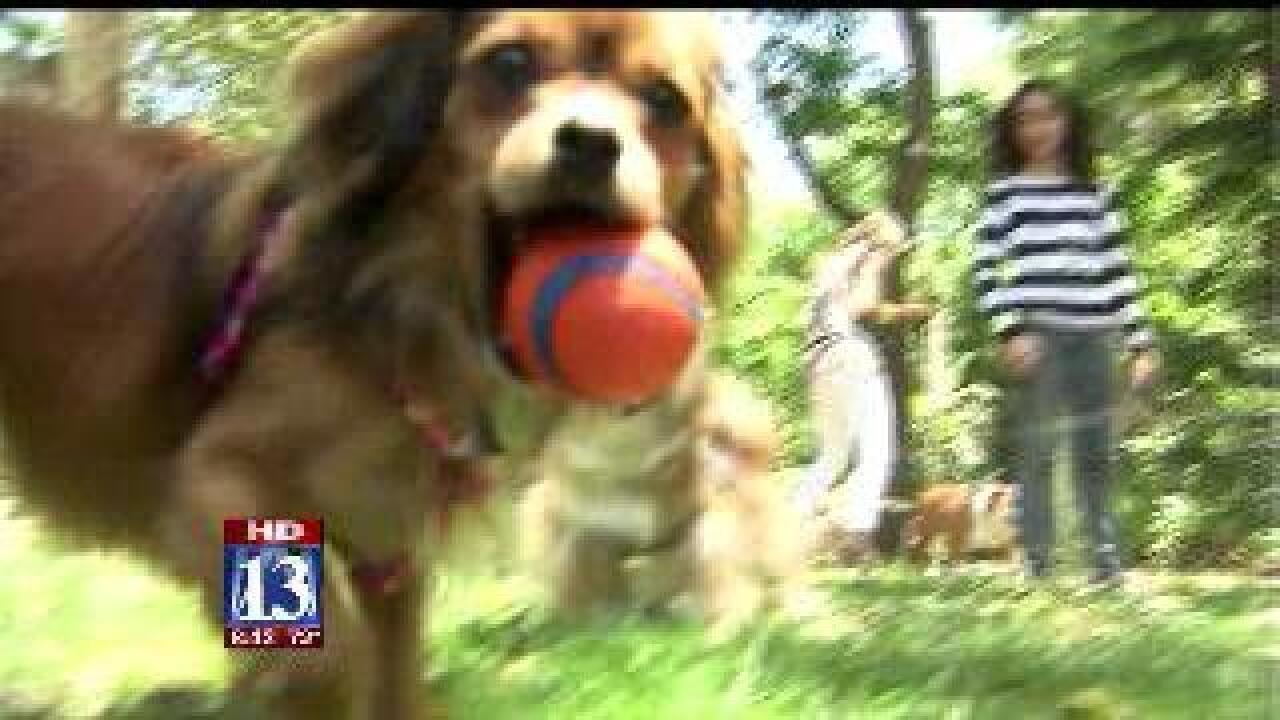 Website helping pet lovers ditch kennel