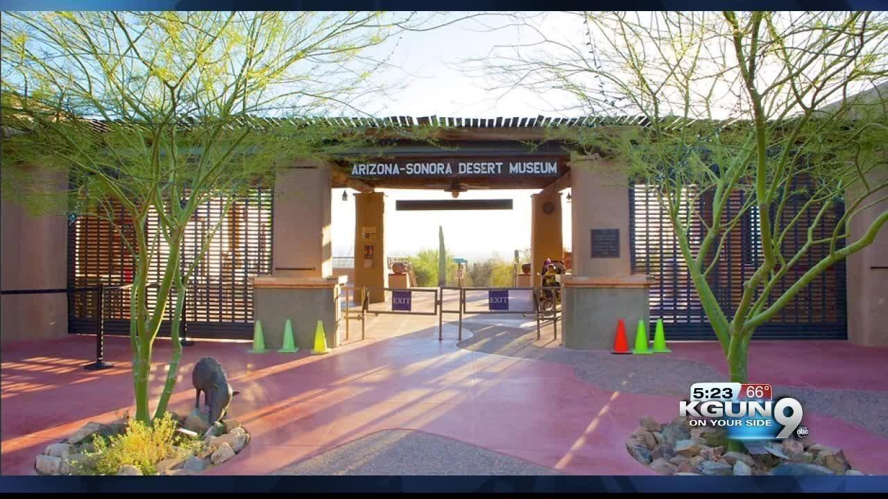 Desert Museum