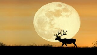 Full Moon October 2021: When To See The Hunter's Moon