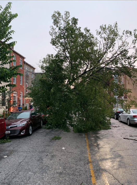 Trees down in Baltimore City
