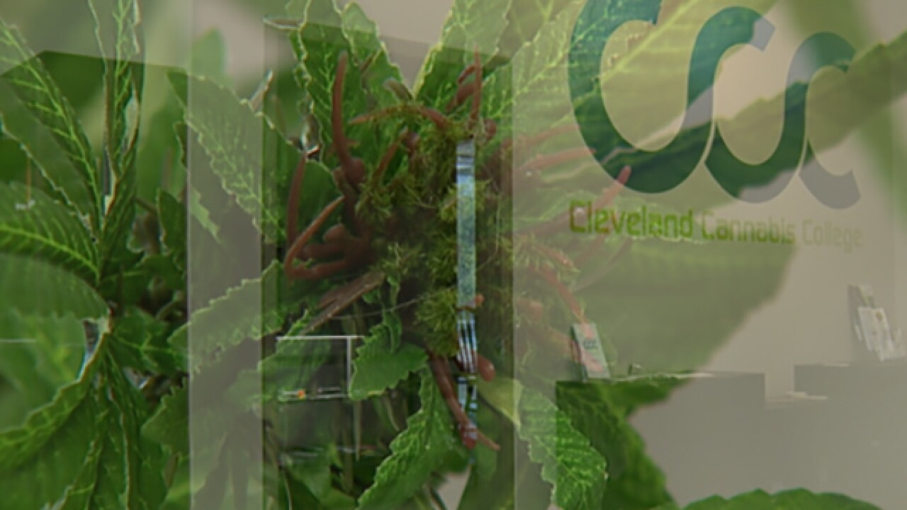 Cleveland Cannabis College curriculum expanding