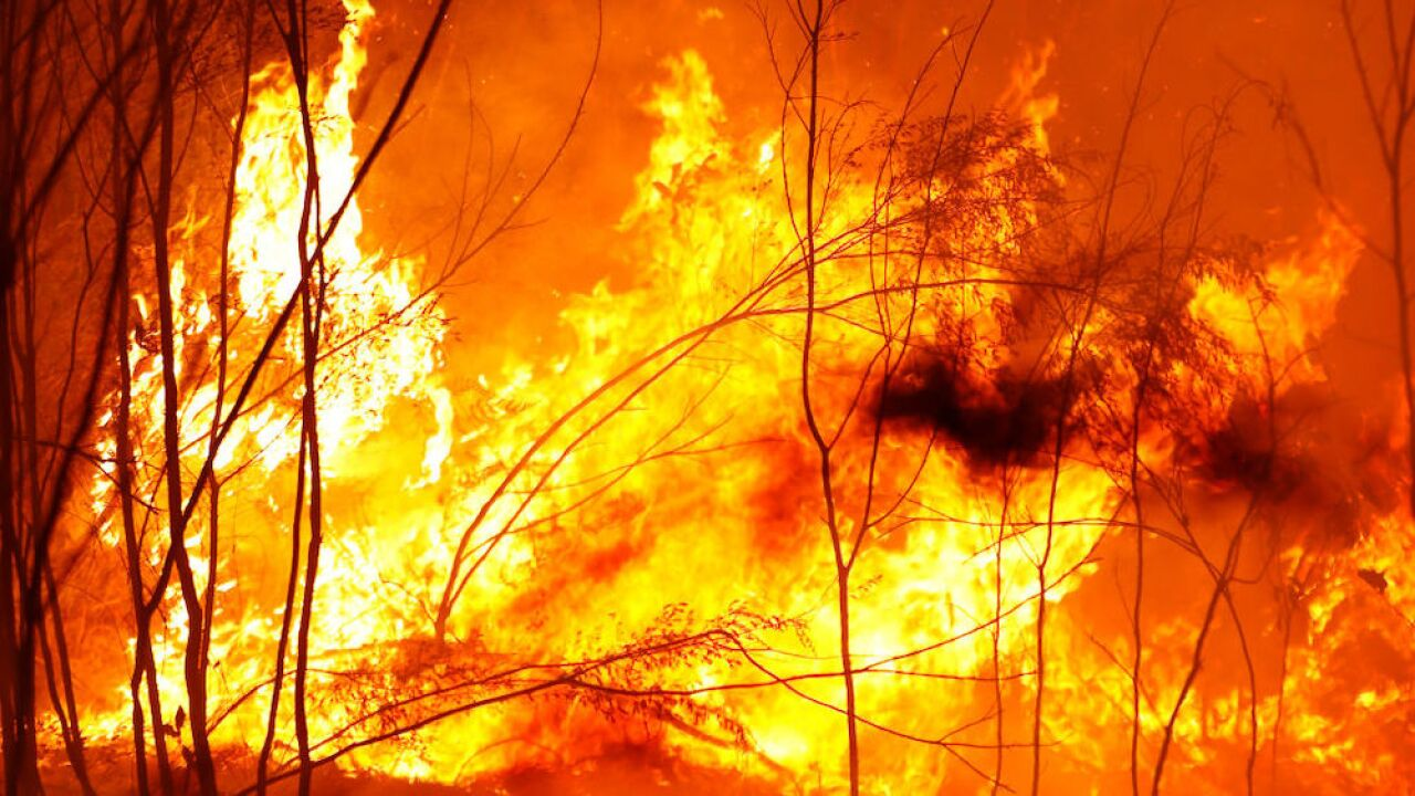 24 people have been arrested for intentionally setting brushfires in New South Wales since November