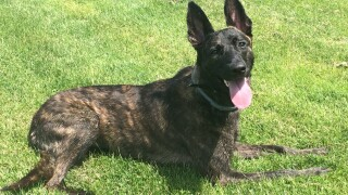 genesee county k9 catches runaway criminal