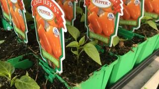 peppers at mcdonald garden center