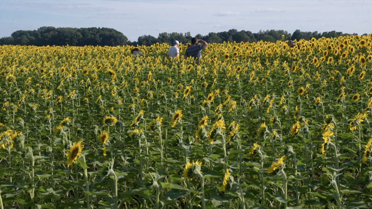 Exploring the sunflowers at Munsell Farms