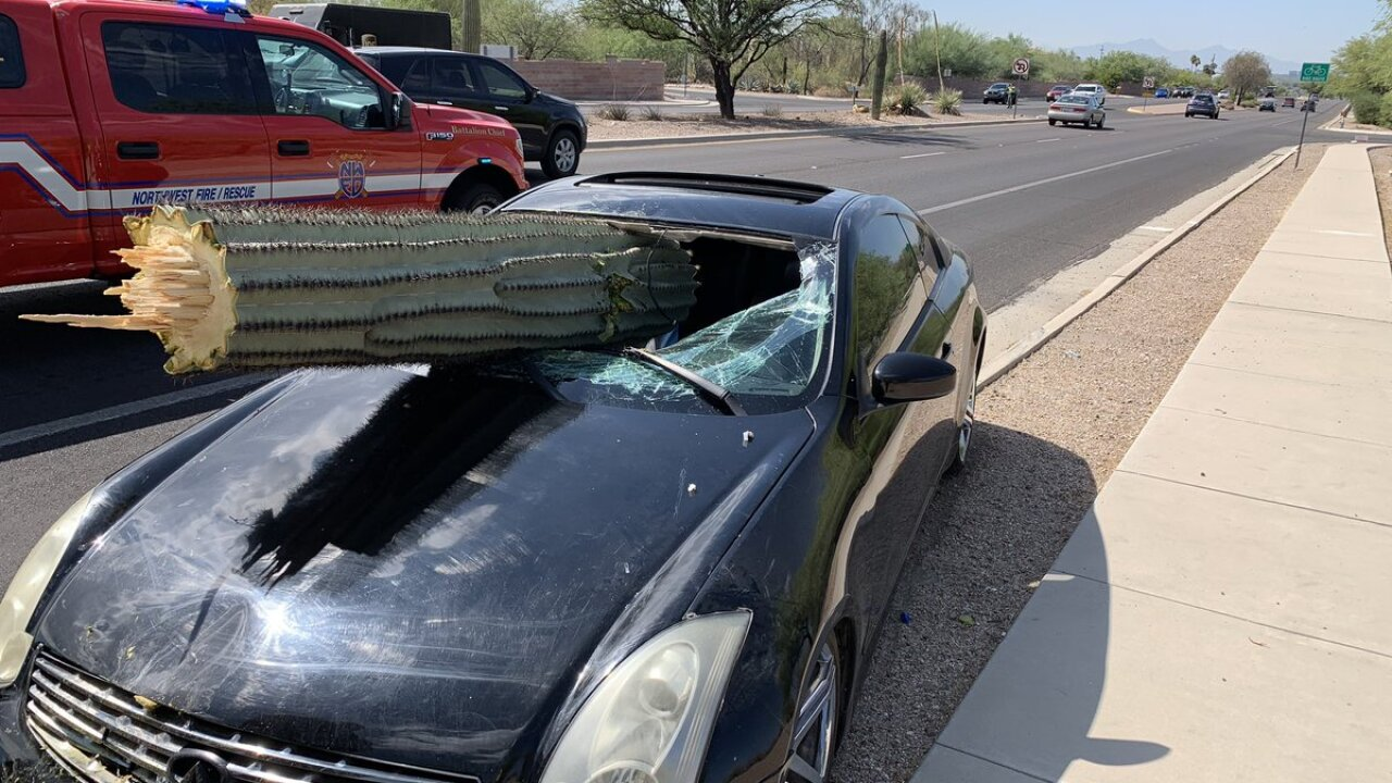 Driver injured after saguaro goes through windshield
