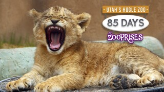 Here are 85 Things FOX 13 Viewers Can Do at Hogle Zoo Throughout theSummer