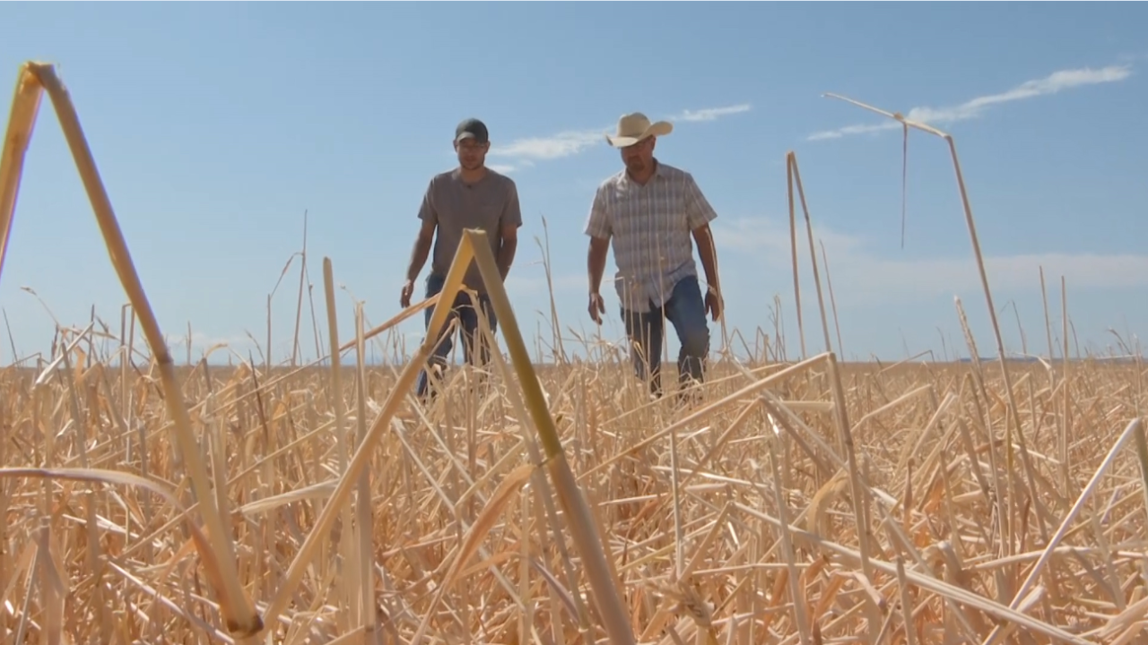Montana Ag Network: Farmers hammered by recent hail storm