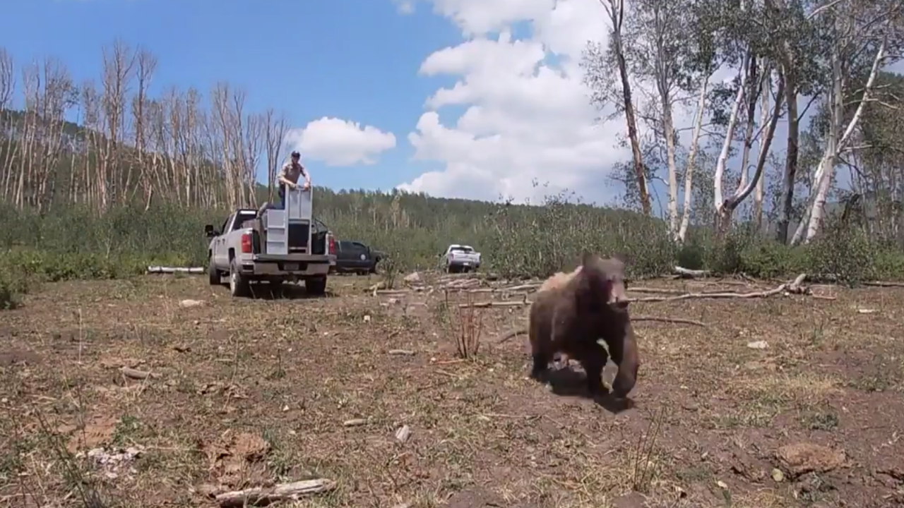 Bear burned in wildfire fully healed, released into wild