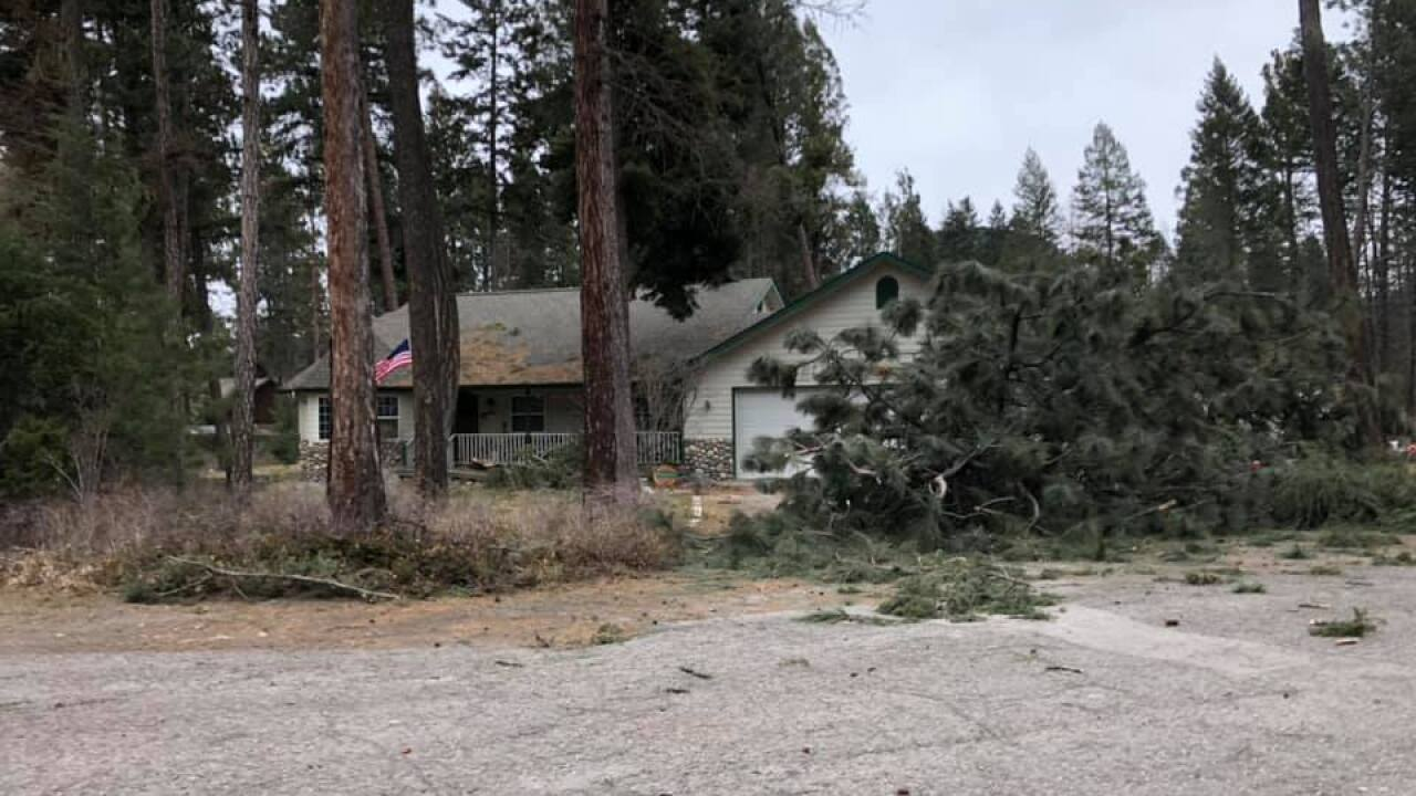 Trees down in Woods Bay home Friday night (courtesy: Joleen Beaubien)