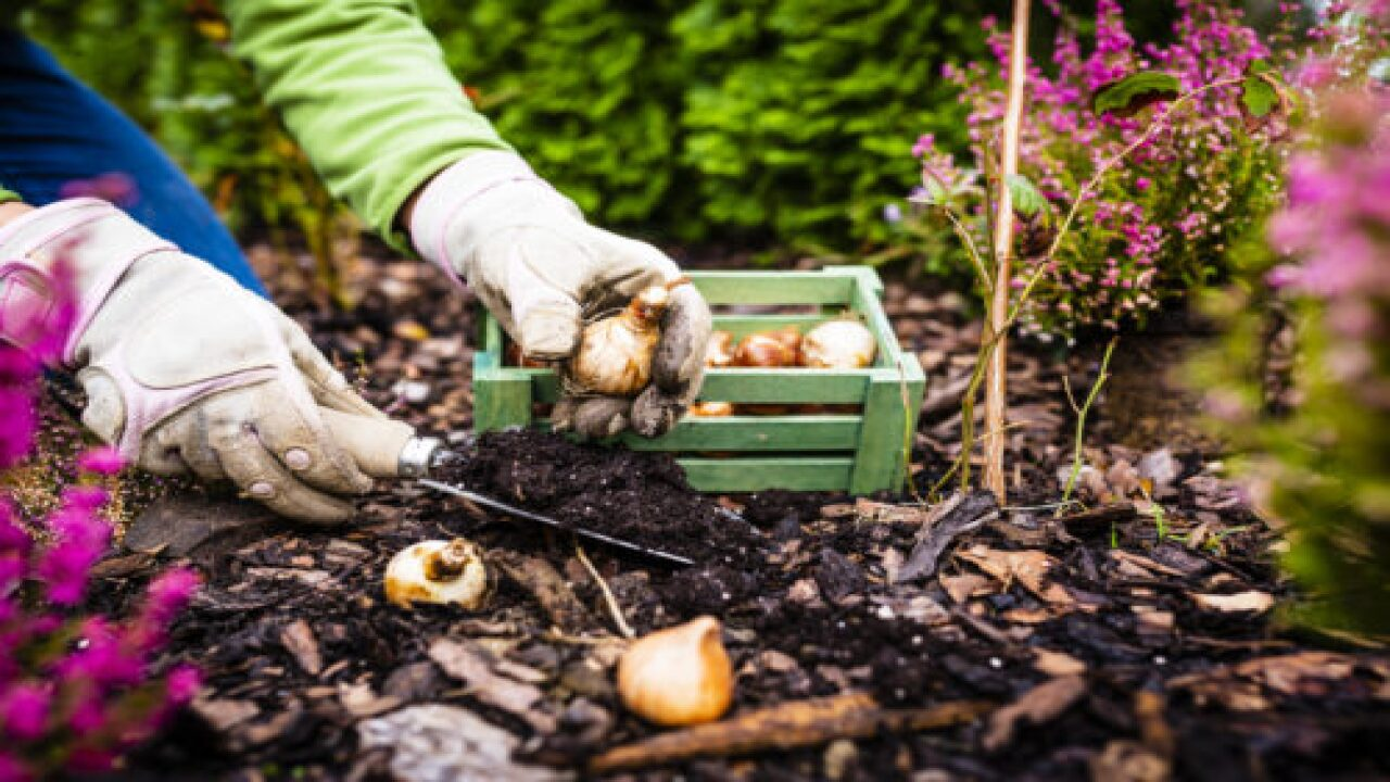 How To Plant Bulbs In Fall For Beautiful Spring Flowers