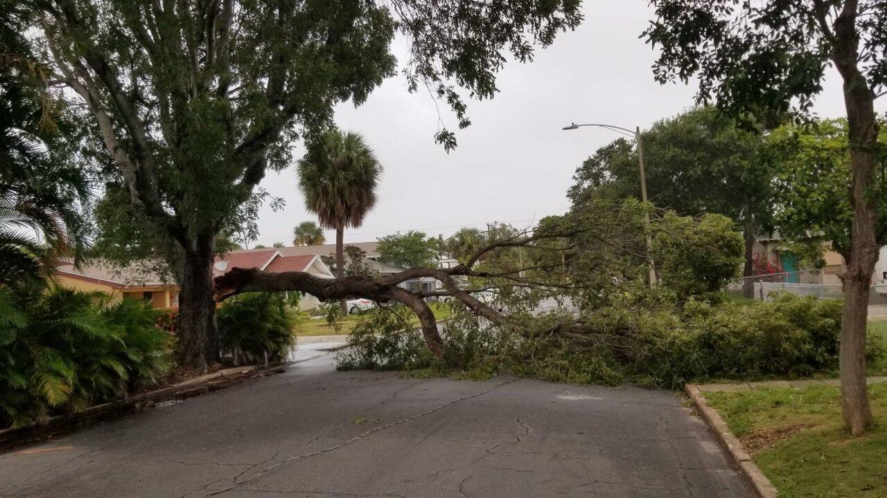 Tree downs power line in West Palm Beach