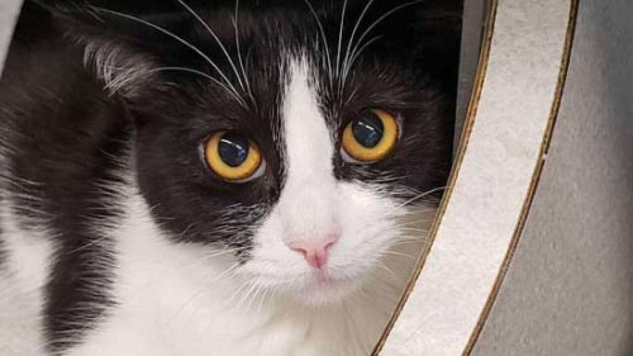 Pet of the Week - Pecan.jpg