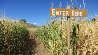 Go inside the Chatfield Farm's corn maze