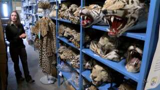 MACABRE MENAGERIE: Storing 1.3 million wildlife parts in a warehouse near you
