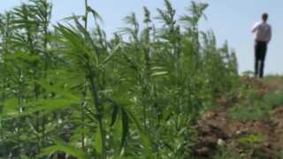 Montana State Hemp Program is now accepting license applications for 2020 season