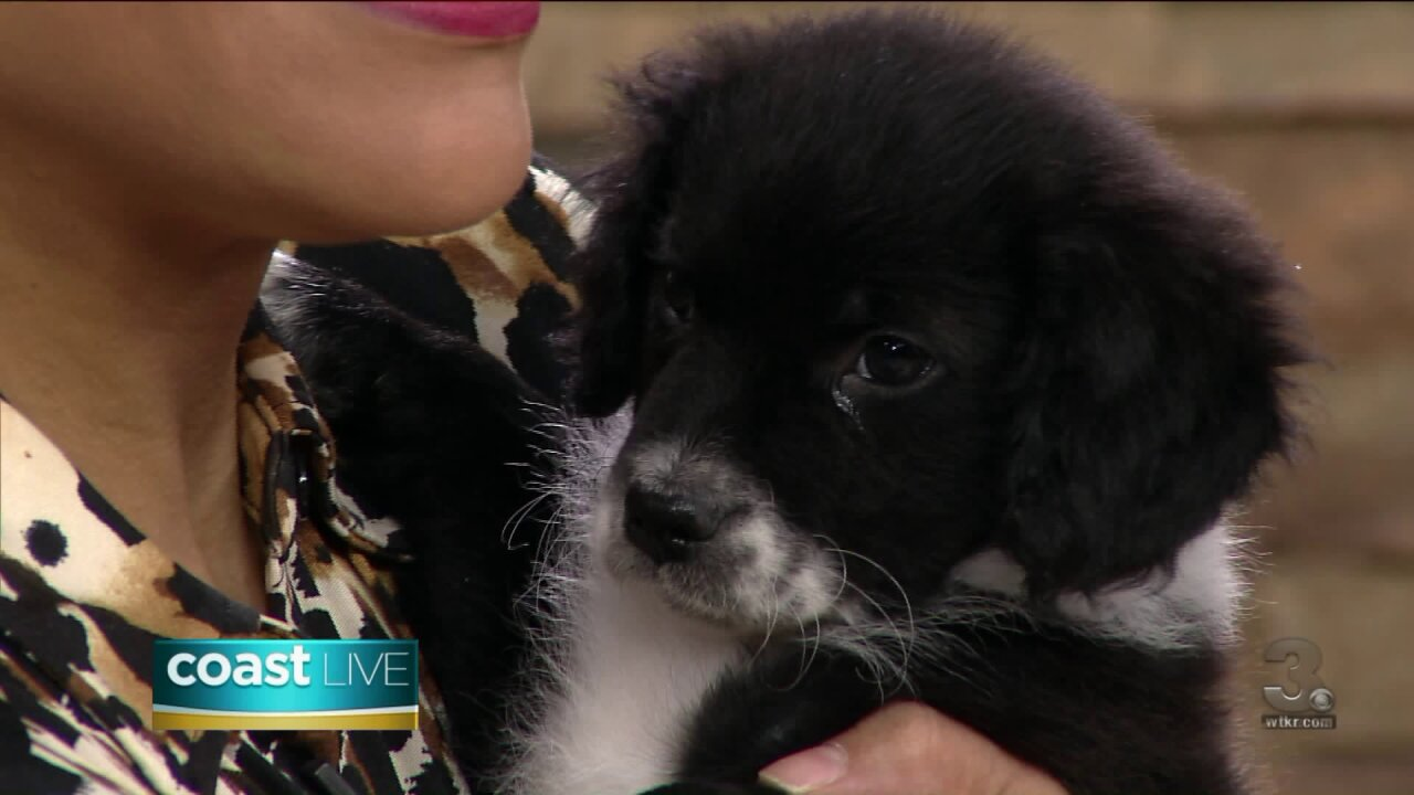 Prepping for the Puppy Bowl with the Virginia Beach SPCA on Coast Live