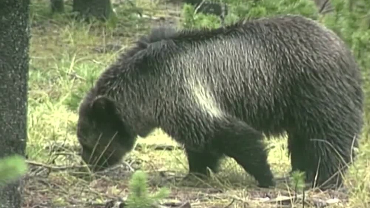 This Week in Fish and Wildlife: Be bear aware and garbage safety