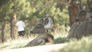 News5 Investigates: Managing city deer herds