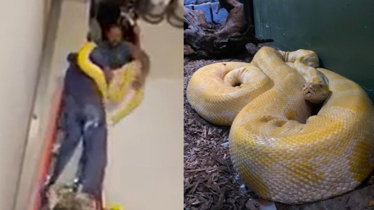 Cara the python found.jpg