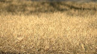 Allergy Grass
