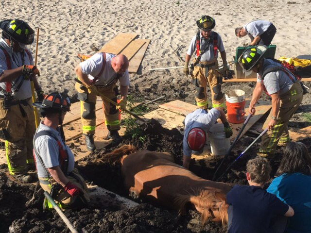 PHOTOS: Stuck horse rescued in The Acreage