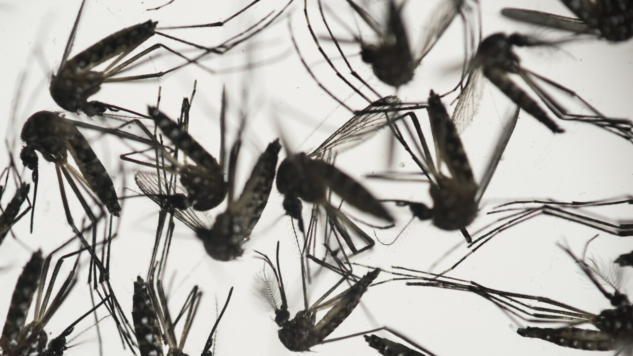 Opposition mounts as Florida officials will release millions of mosquitoes to help quell disease