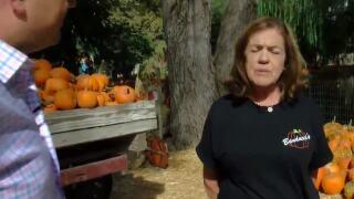 Made in Kern County: Banducci Family Pumpkin Patch