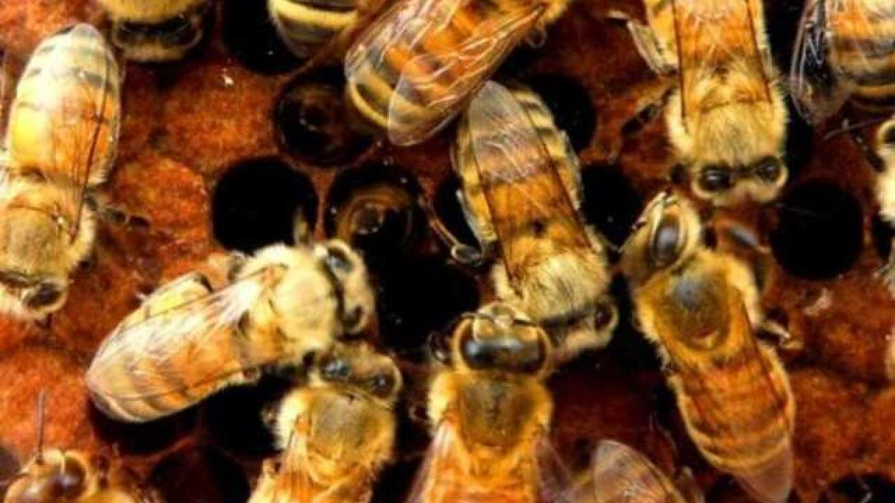 Thousands of bees swarmed this Times Square hot dog stand