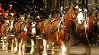 Lebanon holiday horse carriage.jpg