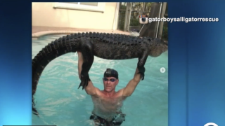 Nearly 9-foot alligator pulled from pool at Florida home
