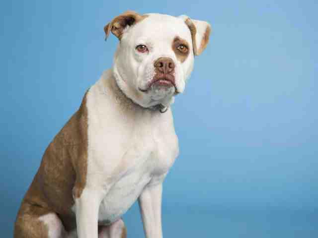 Adoptable pets at Arizona Humane Society and Maricopa County Animal Care (5/30)