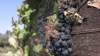 California winemakers believe climate change is impacting their industry
