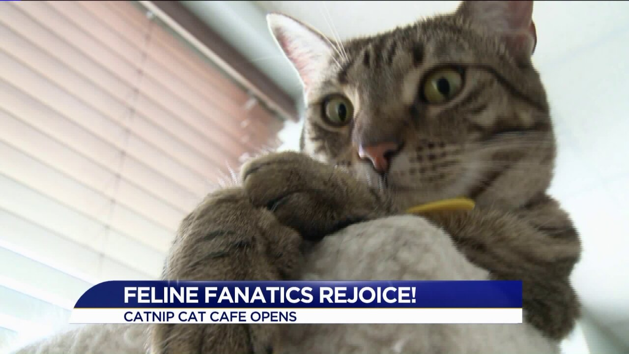 Cat Cafe opens inNorfolk!