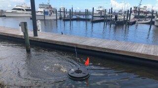 Pahokee Marina on Sept. 13, 2021 after blue-green algae alert