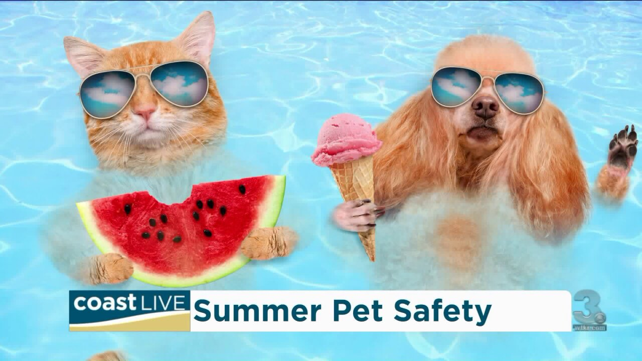 The Norfolk SPCA helps us keep our pets safe in the heat on Coast Live