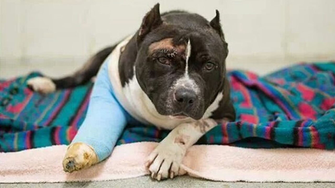Chesapeake pit bull euthanized before volunteers could save him