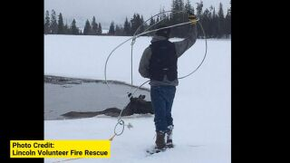Firefighters try to save stranded moose near Lincoln