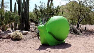 Wild Rising at Desert Botanical Garden