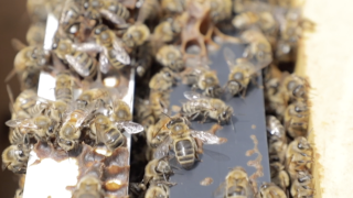 Beekeeping being taught in West Virginia to create economic opportunity in rural areas